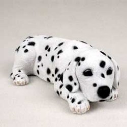 Dalmatier puppy