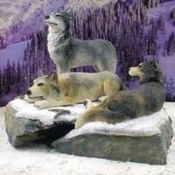 Wolven op rotsen