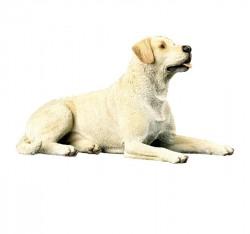 Gele Labrador, liggend