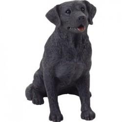 Labrador Retriever, zwart
